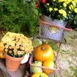 Baskets, pumpkins, pails and mums
