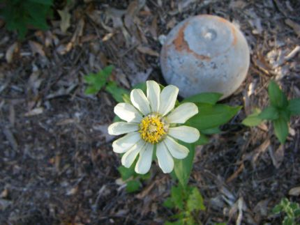 Garden ball made from concrete...flower by nature.