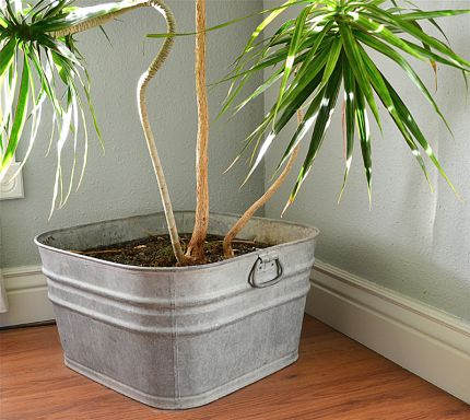 You can by galvanized planter thats made to look old for about $80. Or, you can find an authentically old one for around $20.