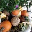 Ahhh gourds and pumpkins,,,a sign of my favorite season!