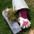 Supplies needed:  moss (I used fresh from the garden store), screen, soil and garden gloves.